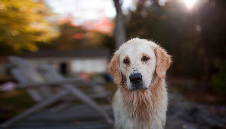Dog Training Andover