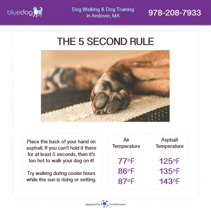 The 5 Second Rule for Dog Paws