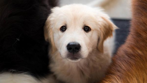 Puppy Classes.