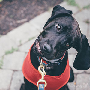 Dog Training Classes Andover MA - Around the Town.
