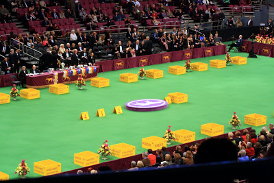 The arena set up for Best in Group: Hounds