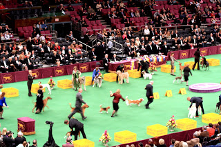 Hound Group entering the ring.
