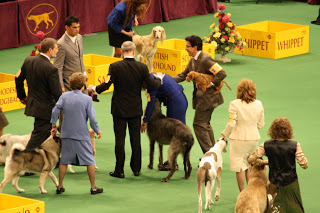 The Scottish Deerhound wins the group!