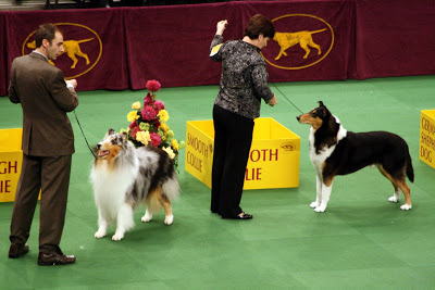 Ok you had to have known I'd have a picture of the Collies.