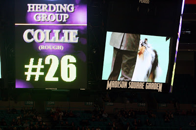 Collie on the big screen!