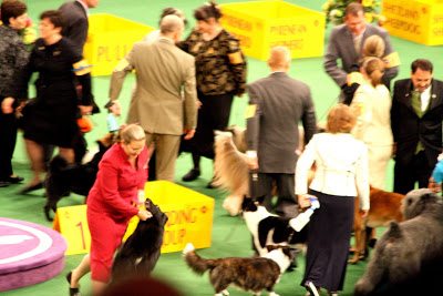 Bearded Collie wins the group and everyone congratulates his handler.