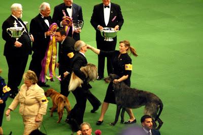 The Scottish Deerhound, Hickory, wins!