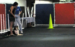AKC Training with Reese