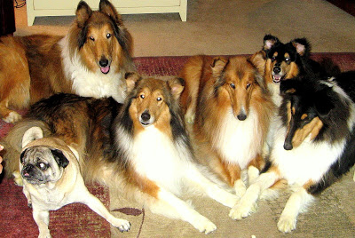 Bunch of Dogs