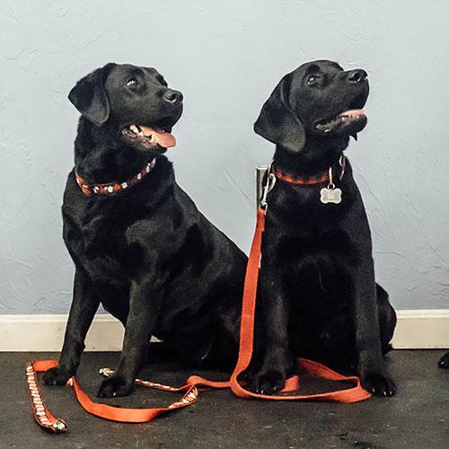 Private Dog Training in Andover, MA.