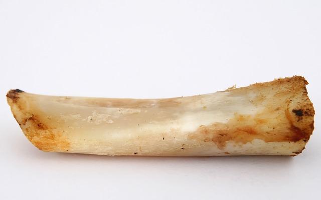Can my dog eat chicken bones?