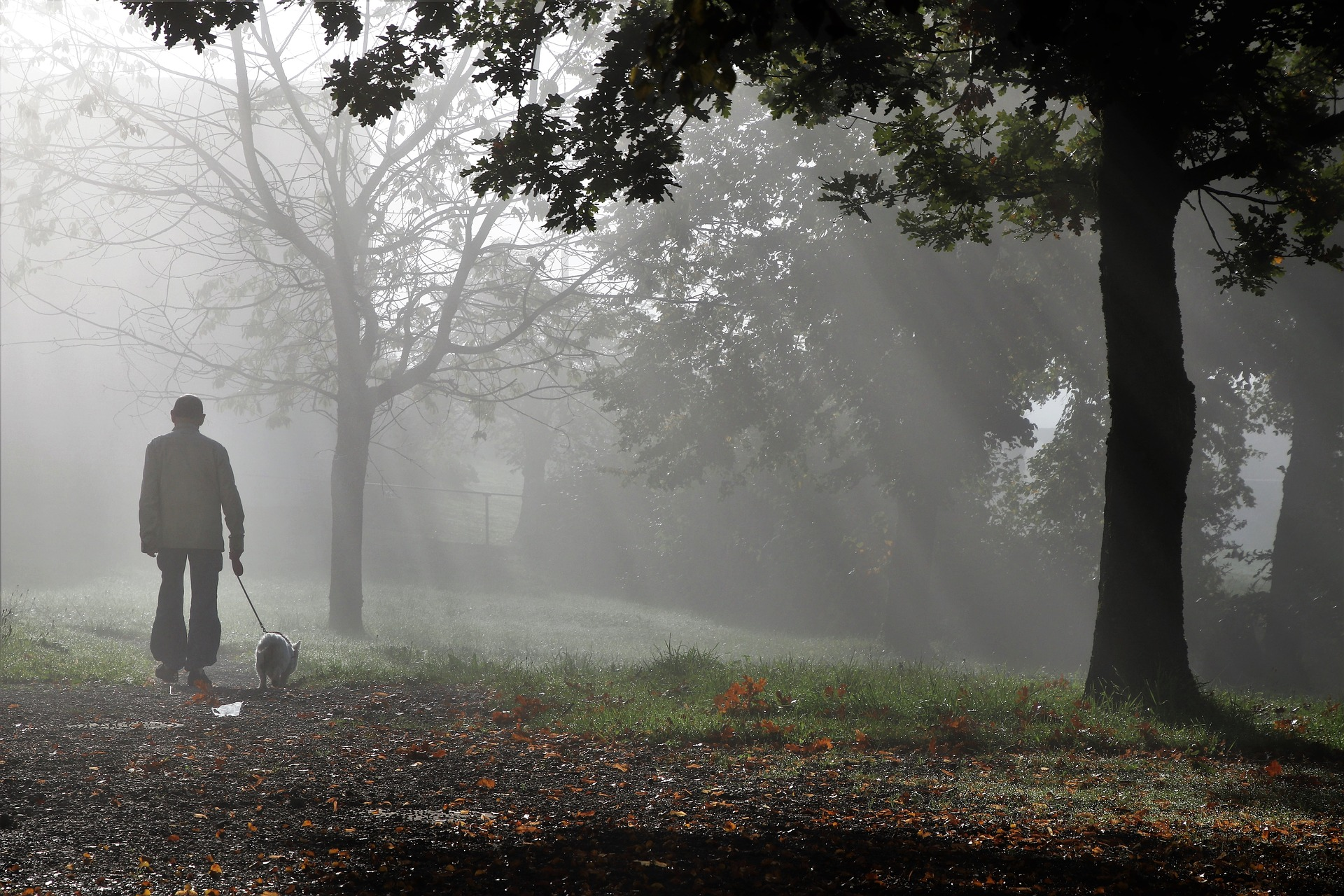 A man walking a dog on a leash through a foggy forest