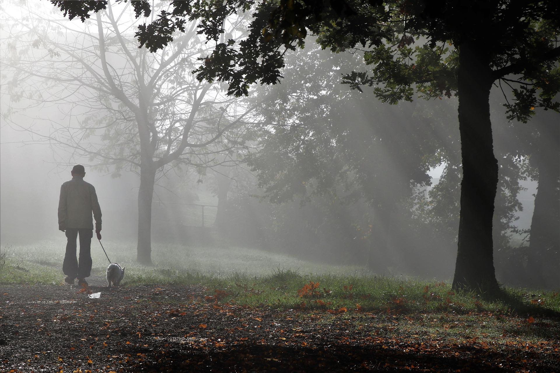 A man walking a dog on a leash through a foggy forest